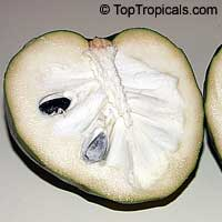 Annona cherimola, Cherimoya, Chirimoya, Custard AppleClick to see full-size image