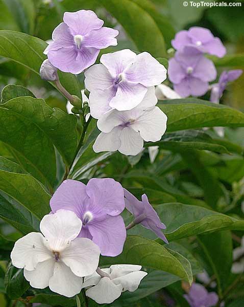 Самые романтические цветы 68