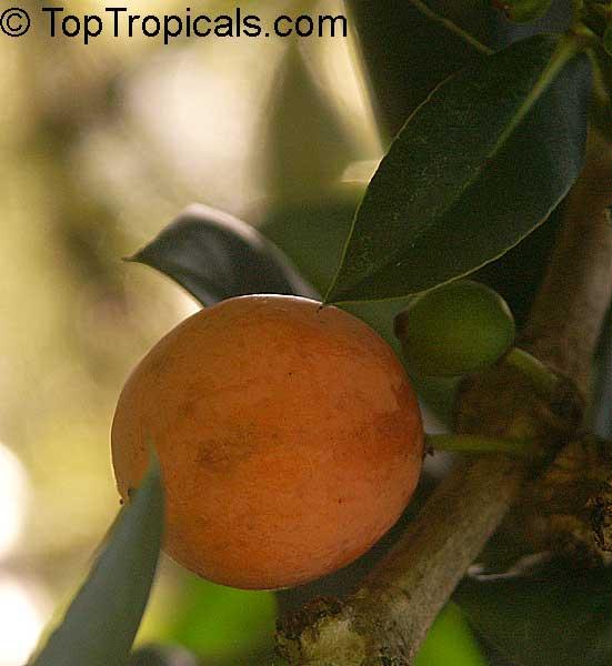 Coconut fat loss image 4