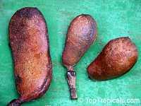 Hymenaea courbaril, Inga megacarpa, Hymenaea animifera, Stinking Toe, Jatoba, Coapinole, Courbaril  Click to see full-size image