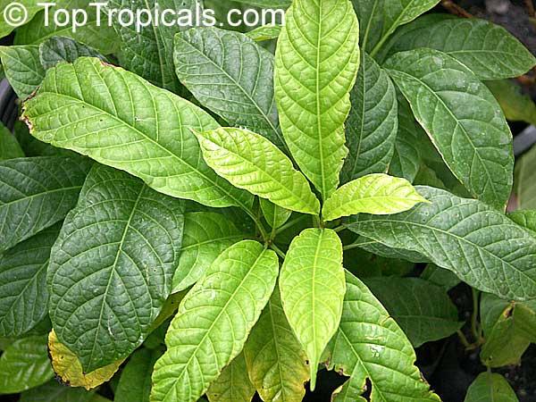 thai plants  pages 10