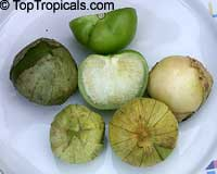 Physalis philadelphica, Tomatillo, Husk Tomato  Click to see full-size image