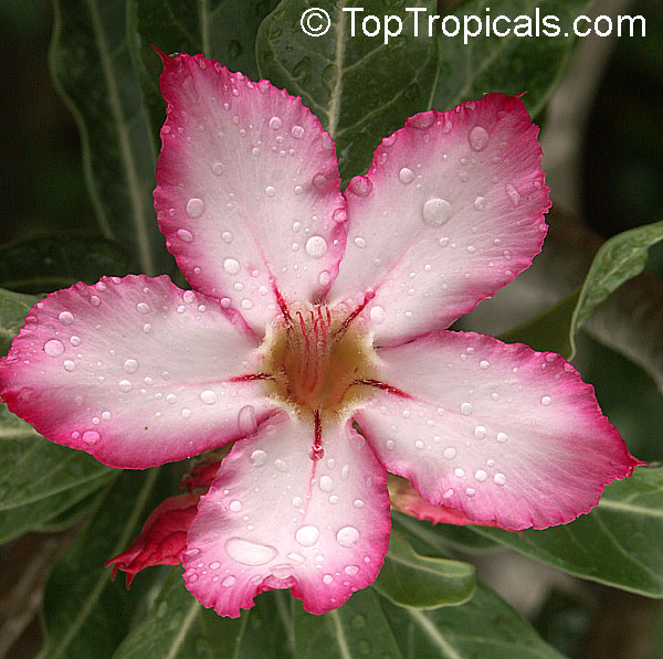 Tropical Plant Catalog Toptropicals