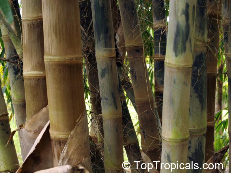 Bamboo Garden Screen