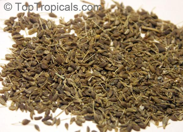 Pimpinella Anisum Seed Pimpinella Anisum Anise