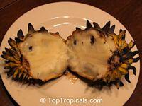 Rollinia deliciosa, Rollinia mucosa, Biriba, Rollinia  Click to see full-size image