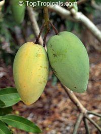 Mango Carabao