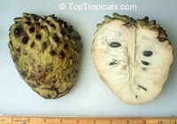 Annona cherimola x Annona squamosa, Atemoya  Click to see full-size image