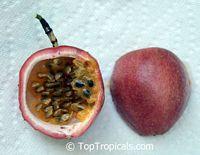 Passiflora edulis, Passion Fruit, Parcha, Maracuya, Granadilla  Click to see full-size image