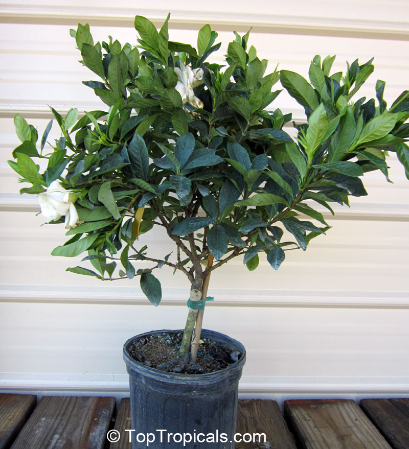 See Picture Of Actual Plant For Sale (1 2013).
