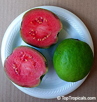 Psidium guajava - Guava Sweet Kiss (red fruit)  Click to see full-size image