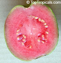 Psidium guajava - Guava Barbie Pink  Click to see full-size image
