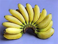 Musa - Banana Chiquita Minis  Click to see full-size image