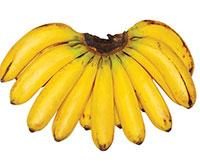 Musa - Banana LactanClick to see full-size image