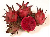 Hylocereus sp. - Zamorano Pitaya, Dragon Fruit Click to see full-size image