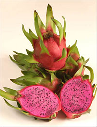 Hylocereus sp. - Edgar's Baby Pitaya, Dragon Fruit   Click to see full-size image
