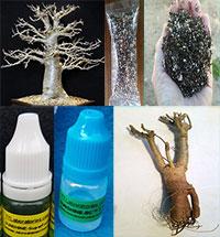 Adansonia digitata - Baobab Bonsai Kit