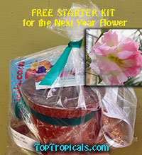 Free Starter Kit for the next year Flower