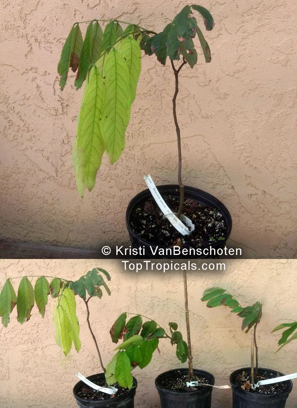 See Picture Of Actual Plants For