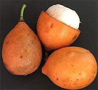 Garcinia humilis Selecto (w/express shipping)Click to see full-size image