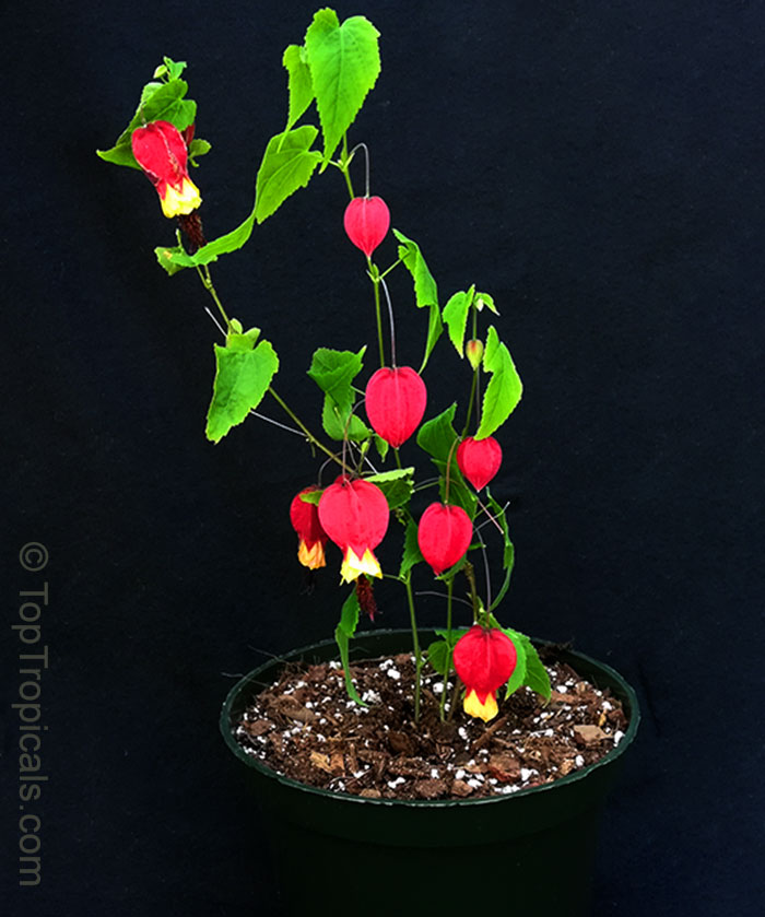 rare plants - fragrant flowers - exotic fruit