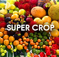 Fruit Festival Plant Food - Super Crop BoosterClick to see full-size image