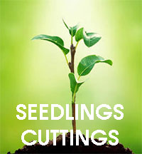 Baby-Plant Food - Seedlings and Cuttings BoosterClick to see full-size image
