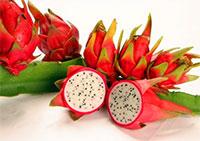 Hylocereus sp. - Lake Atitlan Pitaya, Dragon Fruit   Click to see full-size image