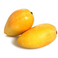 Mangifera indica - Cat Chu Mango, Grafted  Click to see full-size image