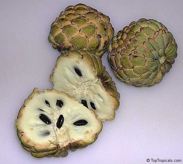 anon fruit - photo #6