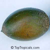 Pouteria viridis, Calocarpum veride, Green Sapote  Click to see full-size image