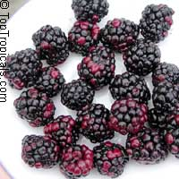 Rubus hybrid - Blackberry Sweetie Pie  Click to see full-size image