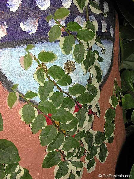 Creeper Plants Wall
