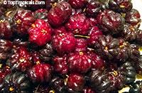Eugenia uniflora, Eugenia michelii, Surinam Cherry, Pitanga, Brazilian Cherry  Click to see full-size image