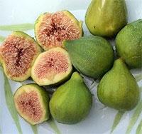 Ficus carica - Fig Lattarula Italian Honey  Click to see full-size image