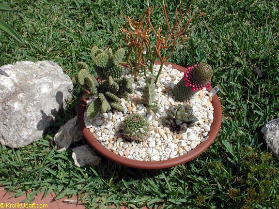 кактус виды с фото и уход