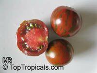 Solanum lycopersicum, Lycopersicon lycopersicum, Lycopersicon esculentum, Tomato  Click to see full-size image