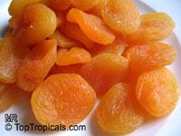 Prunus armeniaca, Amygdalus armeniaca, Apricot  Click to see full-size image