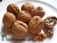 Juglans regia, Persian Walnut  Click to see full-size image