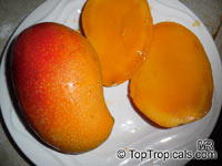 Mangifera indica - Sonpari (San Pari) Mango, Large size, Grafted  Click to see full-size image