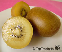 Actinidia chinensis, Kiwi Fruit