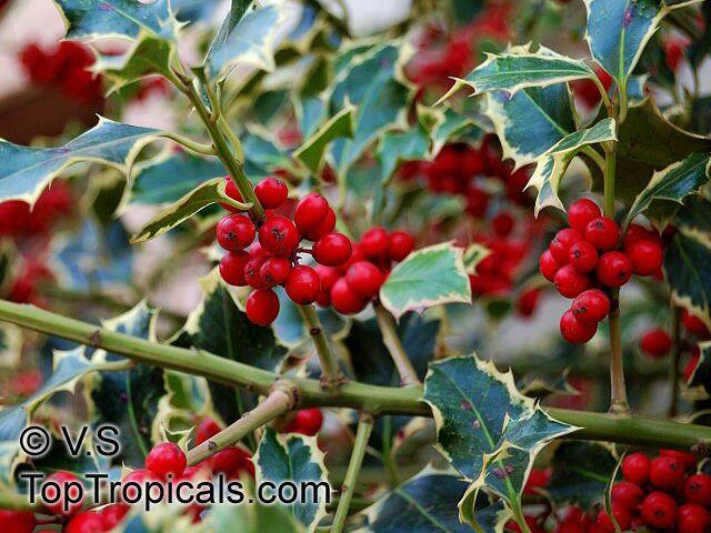 Silver Pop Up Christmas Tree