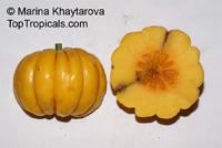 Garcinia atroviridis, Asam Gelugor, GelugorClick to see full-size image