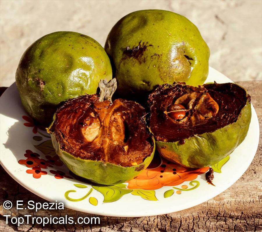 chocolate pudding fruit tropical fruit