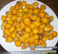Spondias mombin - Yellow Mombin, Hog Plum  Click to see full-size image