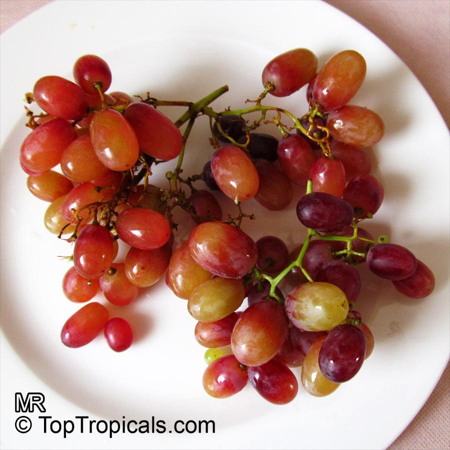 Grape clicker