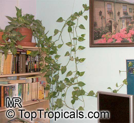 Tropical plant catalog - Hardy office plants ...