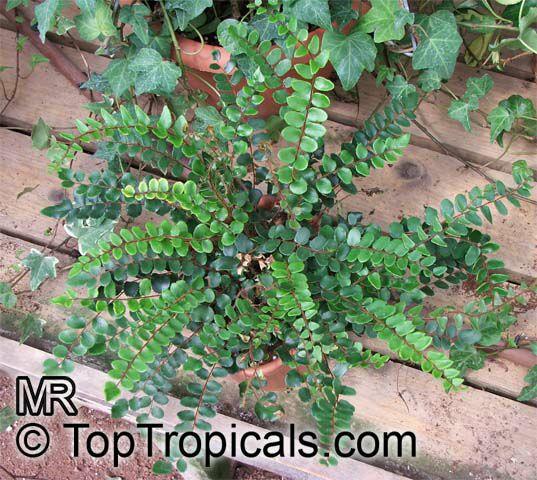 Tropical Plant Catalog