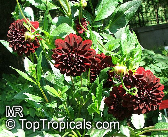 tropical plant catalog. Black Bedroom Furniture Sets. Home Design Ideas
