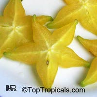 Averrhoa carambola var Possum Gold - Starfruit, grafted  Click to see full-size image